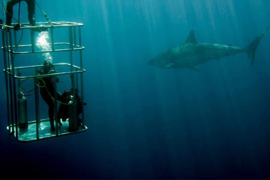 Swim with sharks in Florida, snorkel and watch in cage underwater