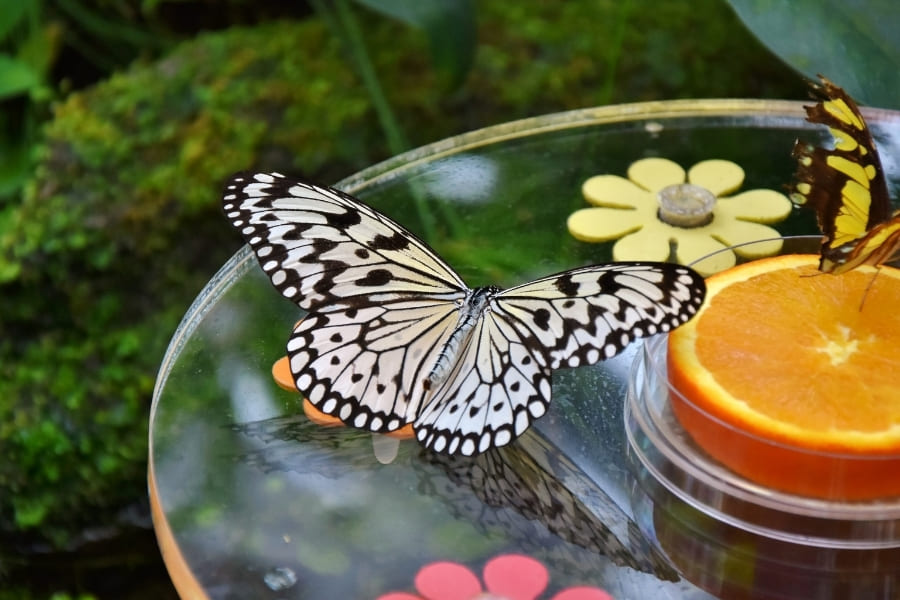 Butterfly Estates in Fort Myers Florida